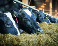 On track with the elements. Aspects of using organically bound trace minerals in cattle feed