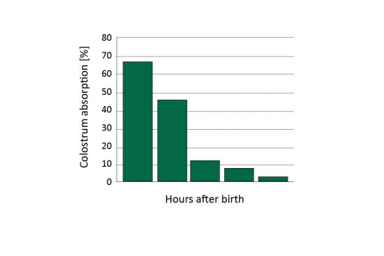 Figure 1: (a) Early colostrum intake gained better immunoglobulin absorption rates (adopted from Watermann, 1998)
