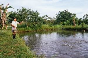3 P's for tilapia: production, protection, profit